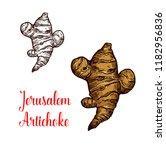 jerusalem artichoke root...   Shutterstock .eps vector #1182956836