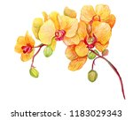 Yellow Orchid. Watercolor Hand...
