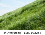 steeply sloping lawn | Shutterstock . vector #1183103266