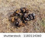 horse shit dung on the dry grass | Shutterstock . vector #1183114360