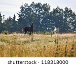 Horse In A Meadow With Black...