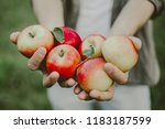 autumn young man picking apples ... | Shutterstock . vector #1183187599