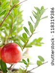 close up of one cranberry fruit ... | Shutterstock . vector #118319386