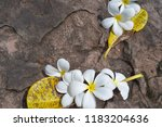 plumeria flowers on stone ... | Shutterstock . vector #1183204636