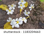 plumeria flowers on stone ... | Shutterstock . vector #1183204663