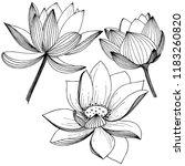 lotus flower. floral botanical ... | Shutterstock . vector #1183260820
