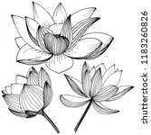 lotus flower. floral botanical ... | Shutterstock . vector #1183260826