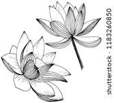 lotus flower. floral botanical ... | Shutterstock . vector #1183260850