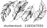 bird feather from wing... | Shutterstock . vector #1183267033