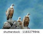 group of vultures. griffon...   Shutterstock . vector #1183279846