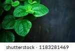 green leaves on dark cement... | Shutterstock . vector #1183281469