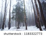 deciduous forest in early...   Shutterstock . vector #1183322773