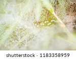 autumn web with dew drops on a... | Shutterstock . vector #1183358959