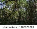 thick cluttered jungle with... | Shutterstock . vector #1183363789