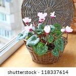 Pink cyclamen flowers in basket on a window in balcony - stock photo