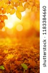 autumn leaves on the sun and... | Shutterstock . vector #1183384660