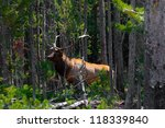 elk shows up in yellowstone... | Shutterstock . vector #118339840