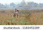 small running horse  in field  | Shutterstock . vector #1183452289