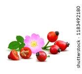 beautiful fragrant rosehip.... | Shutterstock .eps vector #1183492180