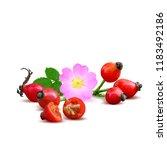 beautiful fragrant rosehip.... | Shutterstock .eps vector #1183492186