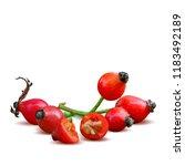 beautiful fragrant rosehip.... | Shutterstock .eps vector #1183492189