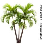 betel palm tree isolated on...   Shutterstock . vector #118351069