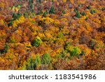 The Forest Is Colored In The...