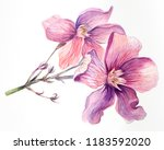 pink flower. branch with petals.... | Shutterstock . vector #1183592020