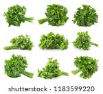 set of fresh green parsley on... | Shutterstock . vector #1183599220