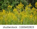 autumn wildflower field with... | Shutterstock . vector #1183602823