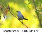 cute little bird  beautiful... | Shutterstock . vector #1183634179