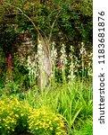 lush flowering gardens in... | Shutterstock . vector #1183681876