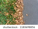 fallen leaves and grass in...   Shutterstock . vector #1183698856