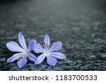 beautiful blue flowers | Shutterstock . vector #1183700533