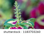 flower background for greetings ...   Shutterstock . vector #1183703260