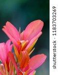 flower background for greetings ...   Shutterstock . vector #1183703269