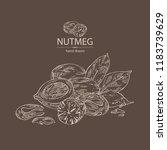 nutmeg  nut and leaves. vector... | Shutterstock .eps vector #1183739629