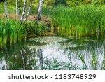 beautiful summer autumn water...   Shutterstock . vector #1183748929