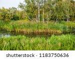 beautiful summer autumn water...   Shutterstock . vector #1183750636