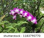 Beautiful Pink Phalaenopsis Orchid Flowers - Fine Art prints