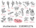 set drawings of herbs used in... | Shutterstock .eps vector #1183801276