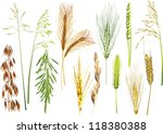 illustration with cereals... | Shutterstock .eps vector #118380388