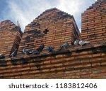 upward shot of pigeons perched...   Shutterstock . vector #1183812406