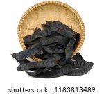 gleditsia triacanthos fruit... | Shutterstock . vector #1183813489