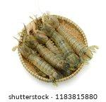 mantis shrimp isolated on white ... | Shutterstock . vector #1183815880