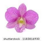 beautiful dendrobium orchid... | Shutterstock . vector #1183816930