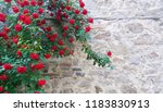 Beautiful Red Roses In Front Of ...