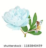 a picturesque peony flower.... | Shutterstock .eps vector #1183840459