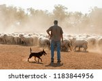 Sheep Mustering In Outback New...