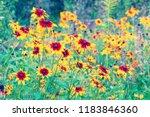 vintage flower background.... | Shutterstock . vector #1183846360